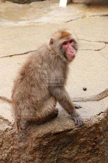 猿の写真・画像素材[469765]
