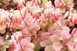 花の写真・画像素材[469770]