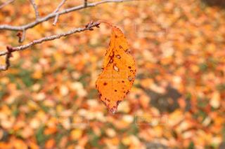 秋の写真・画像素材[474115]