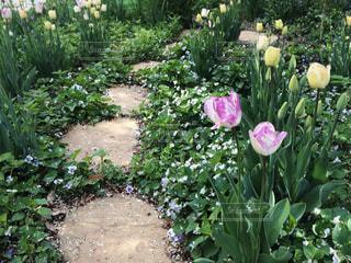 花の写真・画像素材[481911]