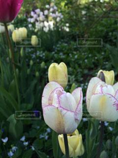 花の写真・画像素材[481933]