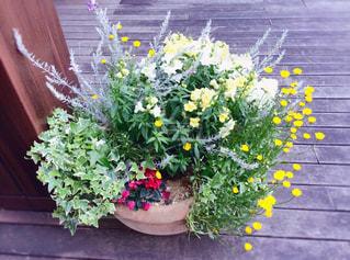 花の写真・画像素材[499329]