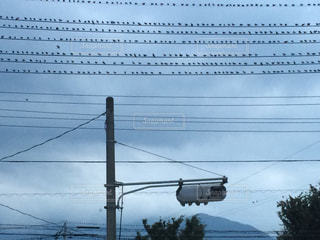 整列しながら電線にとまる雀たち。 - No.1004344