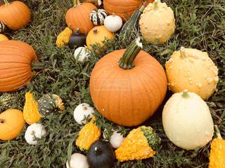 秋の恵みの写真・画像素材[1506100]