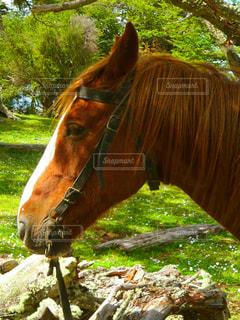 動物の写真・画像素材[513385]
