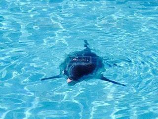 イルカの写真・画像素材[27332]