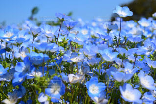 お花畑の写真・画像素材[469810]