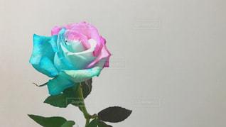 花の写真・画像素材[469823]