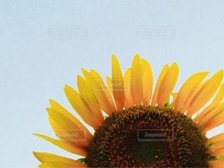 黄色い花のクローズアップの写真・画像素材[2713547]