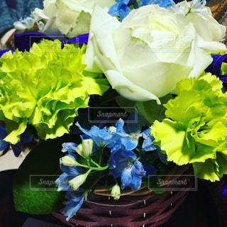 お花の写真・画像素材[469796]
