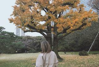 秋のお散歩の写真・画像素材[986084]