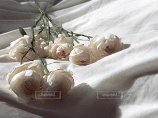 シーツの薔薇の写真・画像素材[986085]