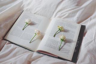 ちょこんとお花の写真・画像素材[987030]