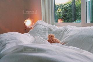 くまだって寝るよの写真・画像素材[987036]