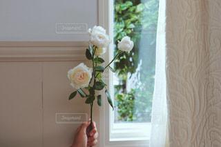 窓際の花の写真・画像素材[987037]