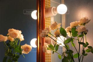 電球と薔薇の写真・画像素材[987038]