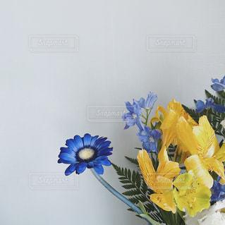 ブルーとイエローの花の写真・画像素材[3269764]