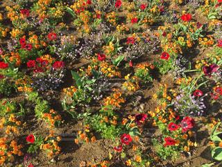 花の写真・画像素材[471345]