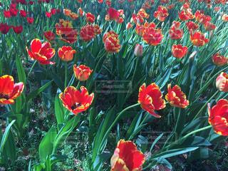 花の写真・画像素材[471346]