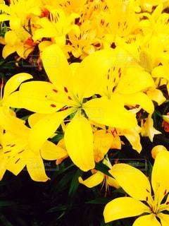 花の写真・画像素材[205723]
