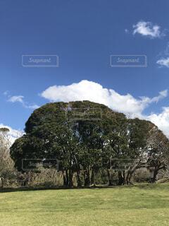 公園の大きな木の写真・画像素材[4407361]