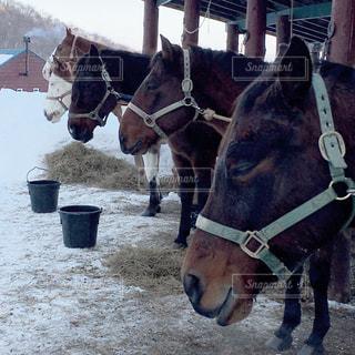 冬の写真・画像素材[559603]