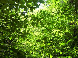 自然の写真・画像素材[555698]