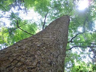 森林の写真・画像素材[558560]