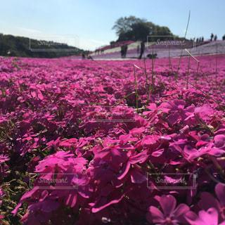 花の写真・画像素材[471182]