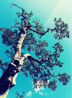 木の写真・画像素材[471454]