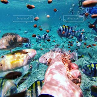 海の写真・画像素材[472314]