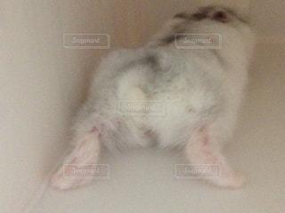 動物の写真・画像素材[471632]