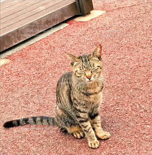 猫 - No.519854