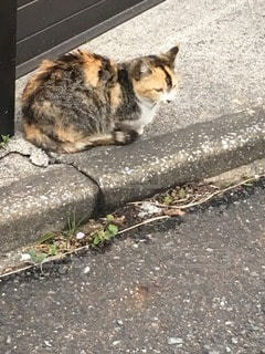 猫の写真・画像素材[53452]