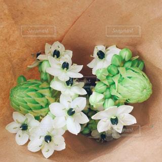 花の写真・画像素材[473915]