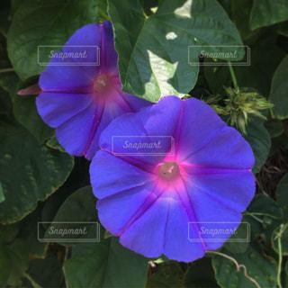 花の写真・画像素材[584855]