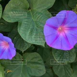 花の写真・画像素材[584858]