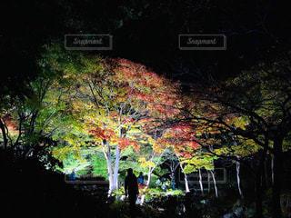 国立昭和記念公園 秋の夜散歩の写真・画像素材[2716581]