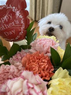 赤い花を持つ犬の写真・画像素材[3192327]