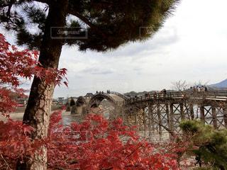 錦帯橋の写真・画像素材[898169]