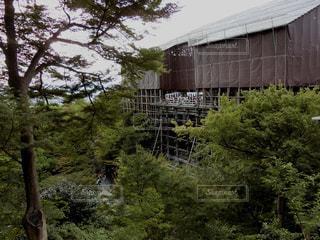 清水の舞台 2017年8月の写真・画像素材[907301]