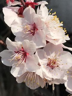 花の写真・画像素材[472461]