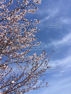 空の写真・画像素材[472093]
