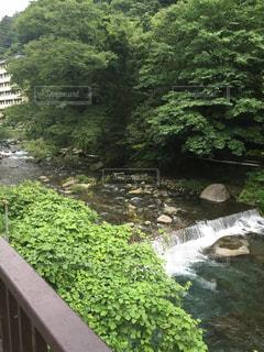 釣り 森 温泉 音 お風呂 - No.472455