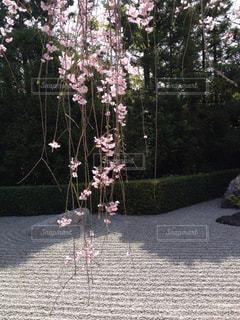 桜 - No.579708