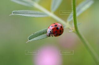 虫の写真・画像素材[491107]