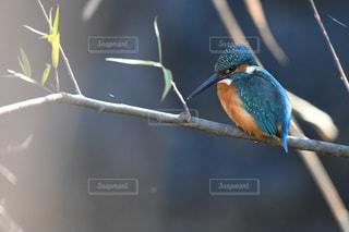 青い小鳥が木の枝に腰掛けの写真・画像素材[984868]