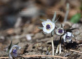 近くの花のアップの写真・画像素材[994978]