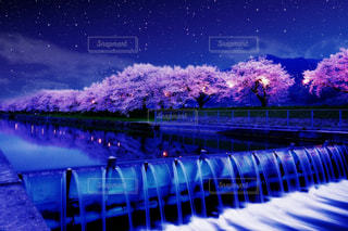 花の写真・画像素材[472318]
