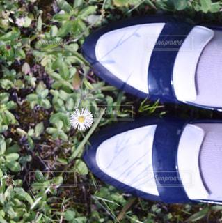 爪先と花の写真・画像素材[488715]